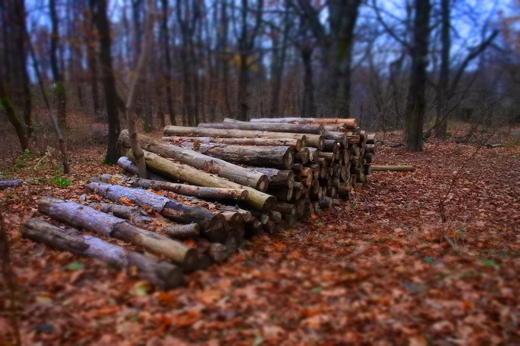 autumn-bark-blurr-282373-small